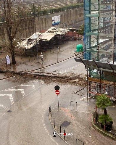"""Tragedia evitata in via Vinciprova, albero cade e """"taglia"""" la strada - aSalerno.it"""