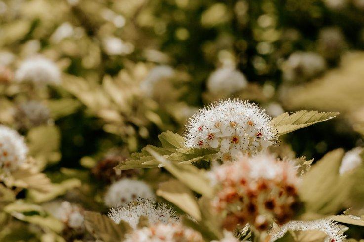 Polline, allergie e reazioni immunitarie: scopriamo di più in un periodo delicato - aSalerno.it