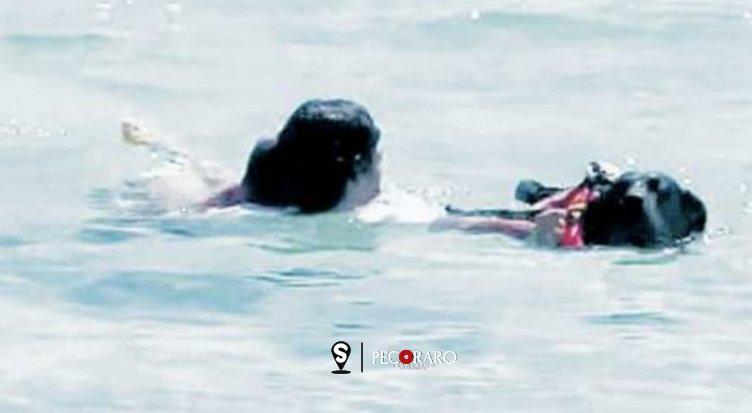 Rischia di affogare, salvata da due cani bagnino nelle acque di Palinuro - aSalerno.it
