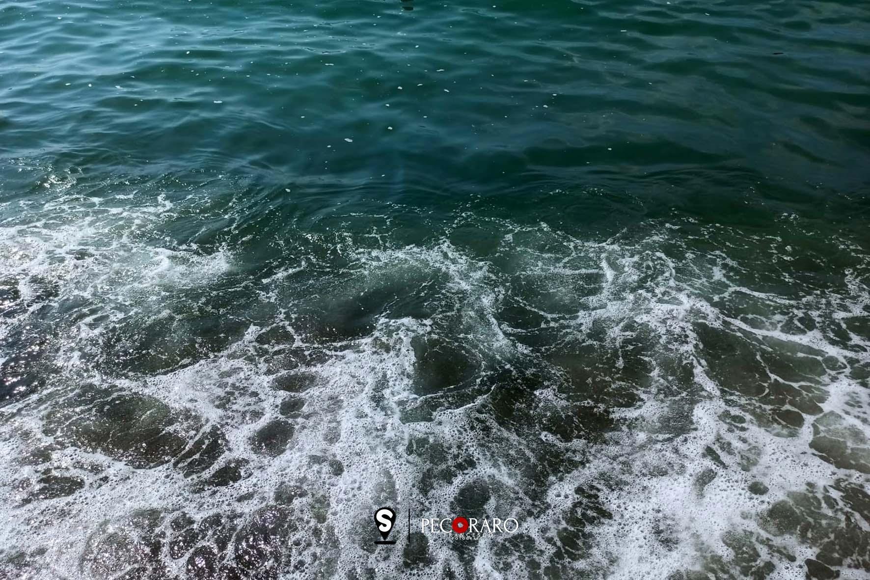 maresporco01